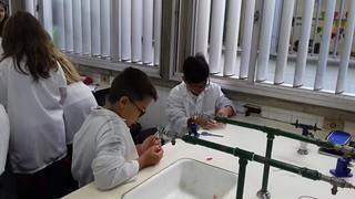 Aula prática de Ciências no Laboratório- 7º ano (fev/2017)