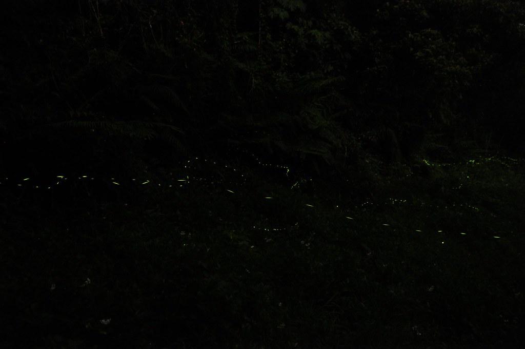 三峽私人景點拍螢火蟲