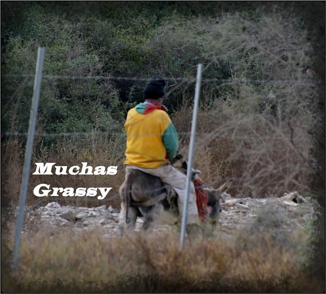 Muchas Grassy - Ass