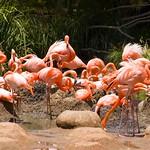 San Diego Zoo 001