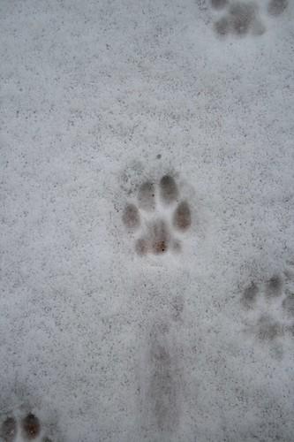 katzenspuren im schnee a photo on flickriver