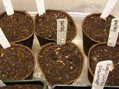 Thumbnail image for Indoor Seed Starting Tips for Beginners