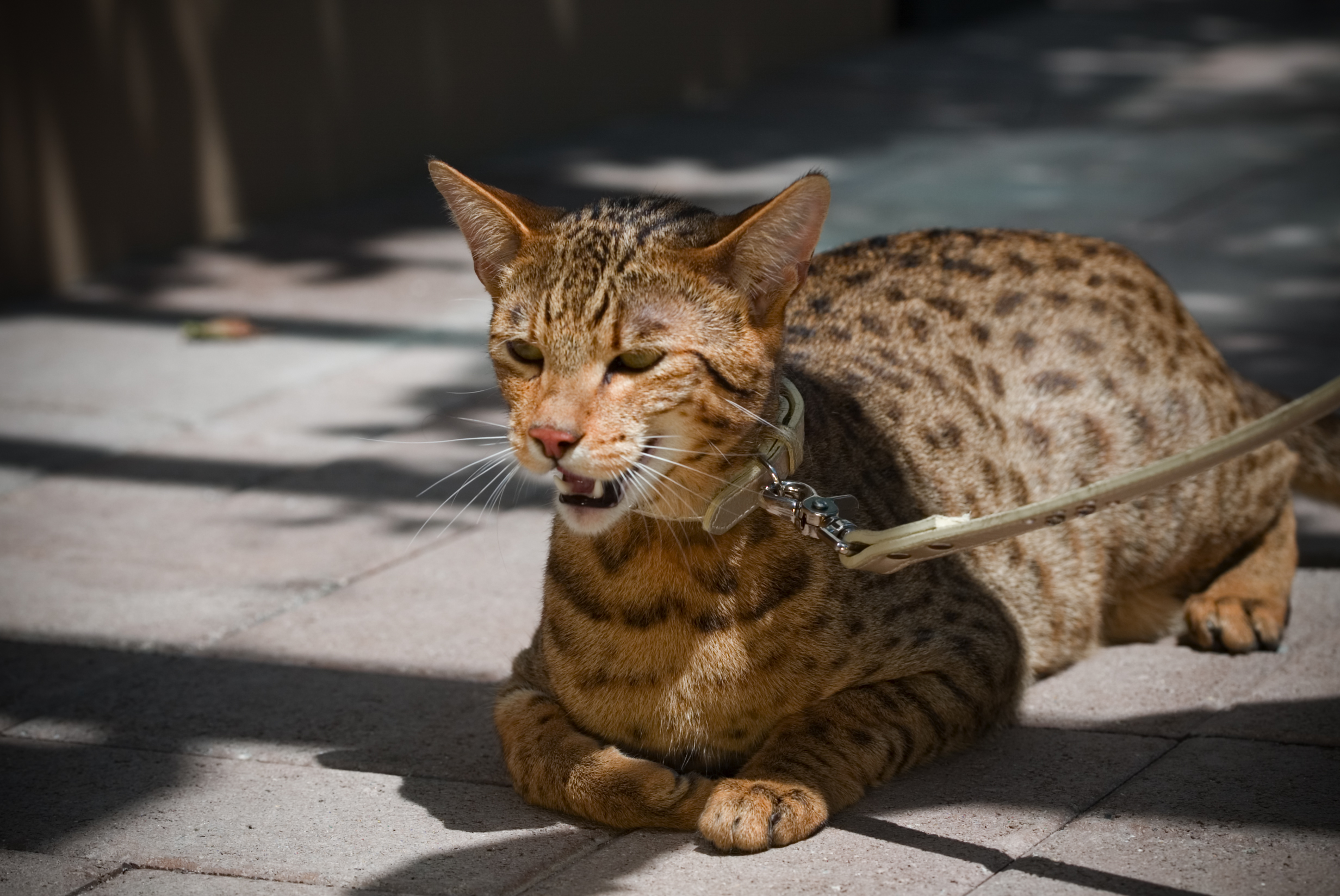 Do Cats Like Buddha Cat Litter Boxes