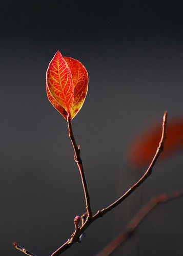 autumn fall leaves mistake naturesfinest d80 theperfectphotographer pmec