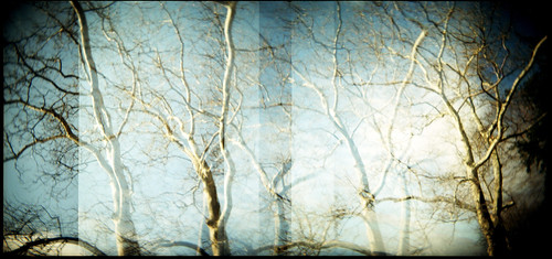 blue sky newyork tree 120 film holga fuji sycamore nyack holgarama beachstatepark pro400h