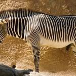 Los Angeles Zoo 032