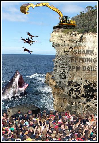 Feeding great white sharks, the great white shard, Shark Feeding