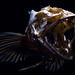 Skullfish by star5112