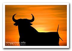 toro de Osborne, La Muela, España