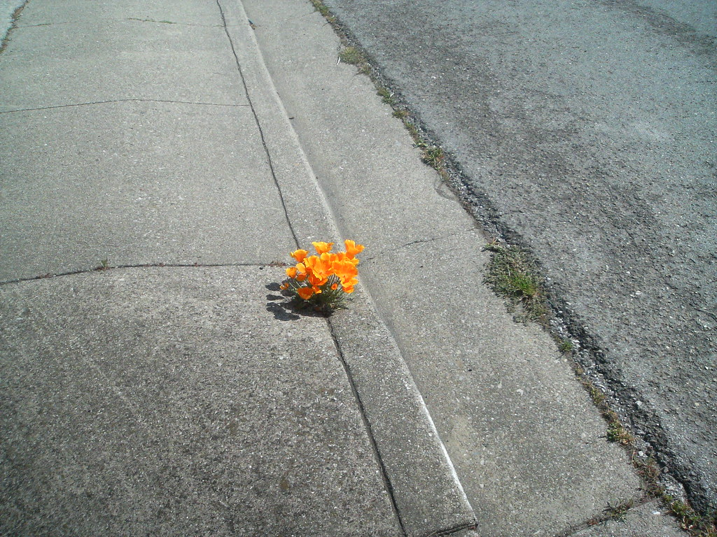 Flowers on the sidewalk