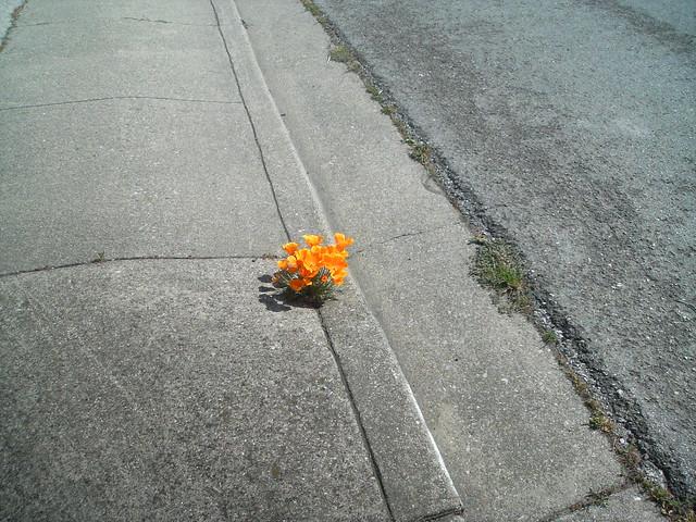 Flowers on the sidewalk