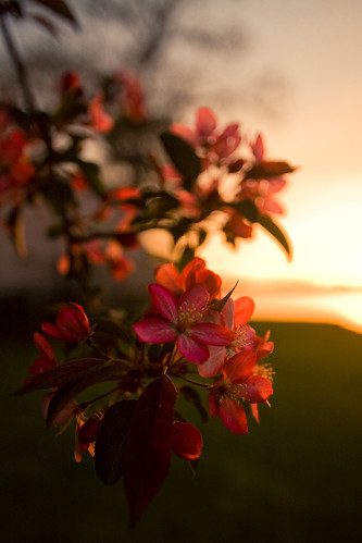 flowers sunset lake mi spring bokeh orion mywinners excapture
