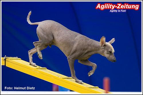 084-Machu-Pichu, Peruanischer Nackthund