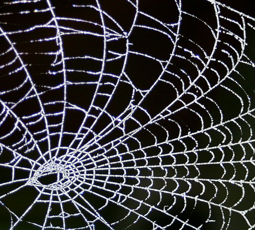 Frosty Morning Web from Flickr via Wylio