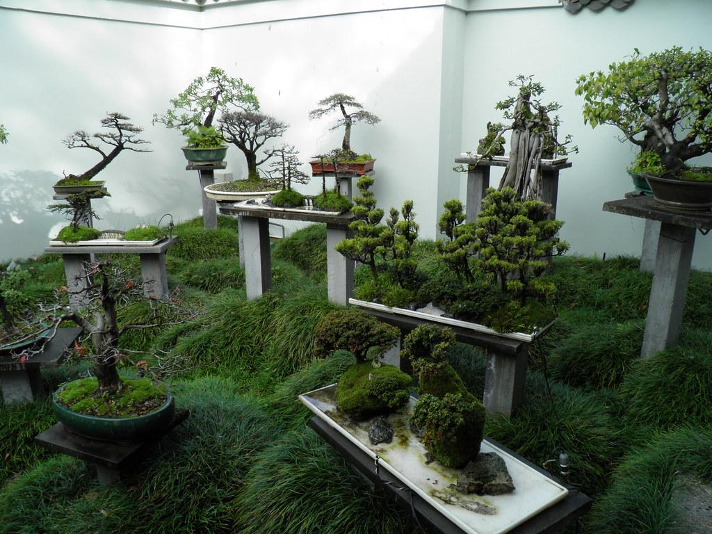 Bonsai Garden A Photo On Flickriver