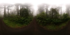 Panoramas in the mist