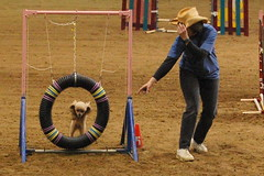 dog sports, animal sports, outdoor play equipment, play, sports, dog agility,