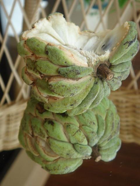 Pinha, nona ou fruta-do-conde - no Brasil