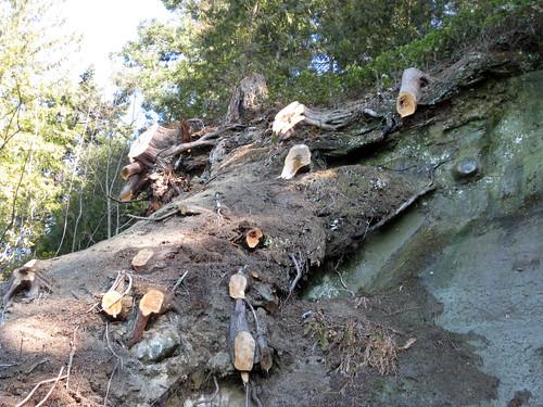 Storm and landslide damage, Stanley Park sea wall