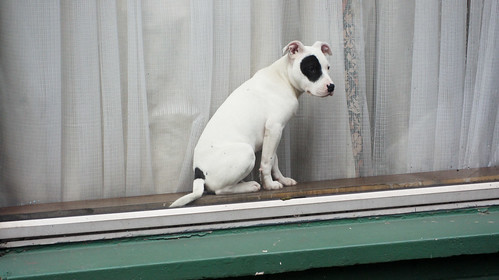 (How Much Is) That Doggie in the Window?