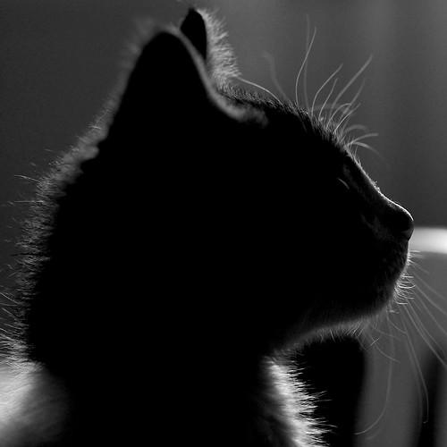 Mr. Cat.
