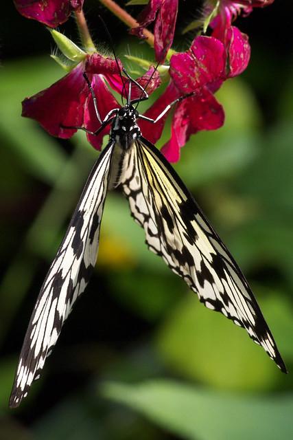 動物園撲蝶
