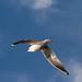 Edg_Res_Birds-1.jpg