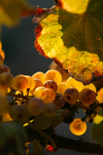 sunset winery vineyards valley grapes napa truchard