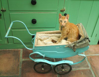 Doll's pram cat bed...