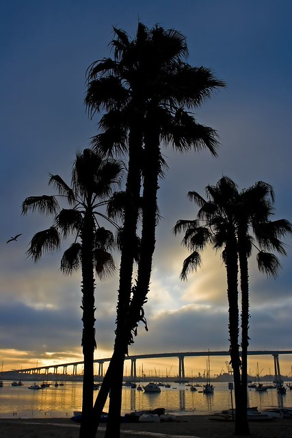 Coronado Palms Sunrise