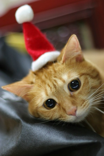 Why cat cannot go to christmas party? >_<