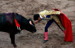 performing arts(0.0), animal sports(1.0), cattle-like mammal(1.0), bull(1.0), event(1.0), sports(1.0), entertainment(1.0), matador(1.0), performance(1.0), bullfighting(1.0),