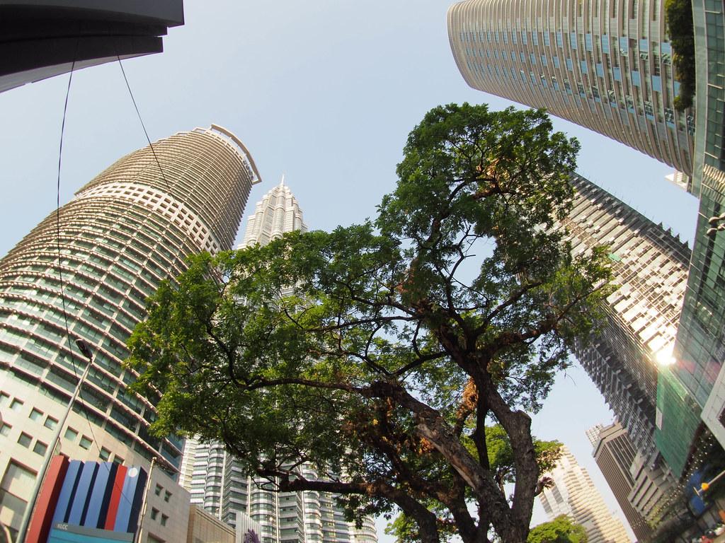 渺小的大树在都市建築丛林中挣扎 Green struggle in the city amongst the concrete towers