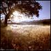 Ojai - Version 4 by Ethan Koerten