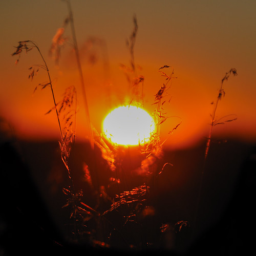 sunset orange sun newmexico grass silhouette bravo bokeh grasses foryou nikon50mmf14d sooc nikond300 image:FileName=200712031f