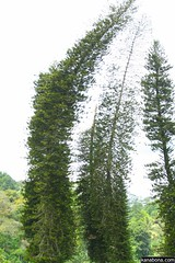 branch, tree, forest, biome, temperate broadleaf and mixed forest, spruce,