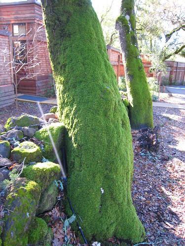 napa, calistoga ranch, moss, green IMG_1326