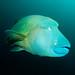 Maldives fishessss (Ocean Dancer)