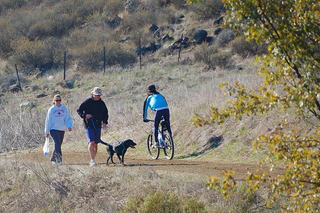 Thanksgiving Dog Walking Tucson