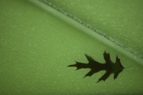 Leaf On Green