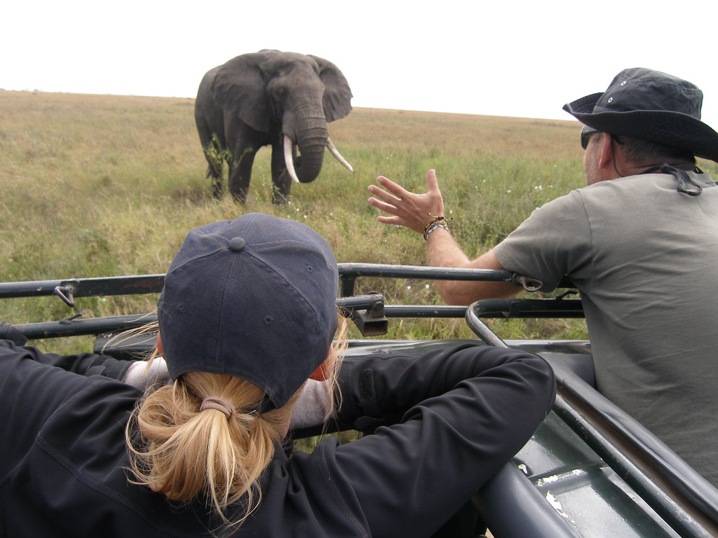 elephants07