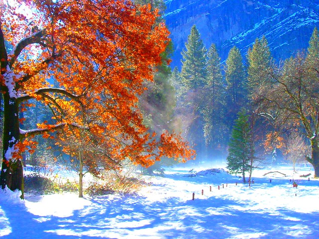 Yosemite Fall Colors in Winter