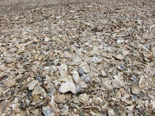 Shell Beach IMG_5925