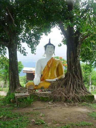 L-Det-Khong-Champassak (17)