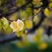 Leaves by carlosluis