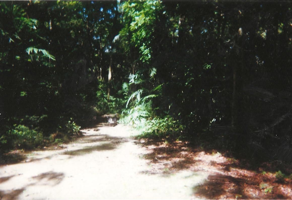 scan0540-1