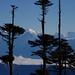 Alpinic by TheBackupVault