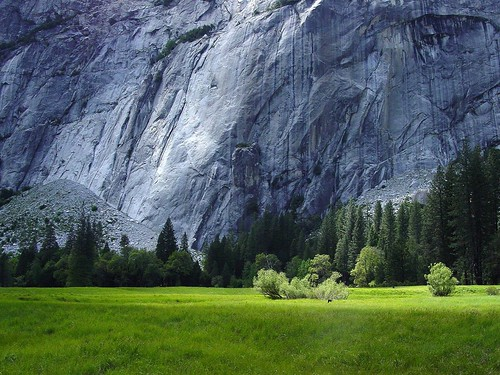 Grass Rock Contrast, Yosemite