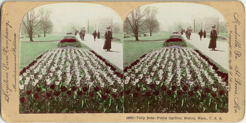 Tulip Beds  Public Gardens, Boston, Mass , U S A    File nam