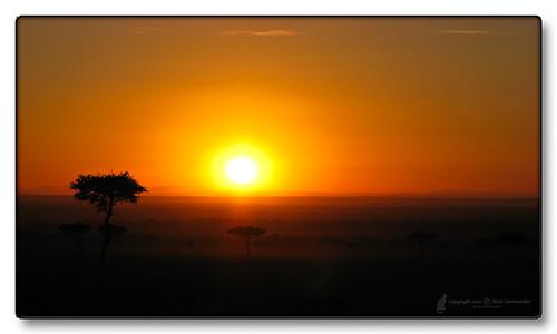 africa camping wild sun sunrise flora view kenya places safari vy habitat utsikt acacia soluppgång savanna riftvalley solen savann masaimaranationalreserve maasaimaranationalreserve platinumphoto acaciadrepanolobium whistlingthorn theperfectphotographer